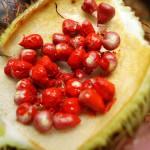 achiote-fruit